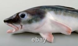 Very rare Royal Copenhagen fish figurine in the form of cod # 457. Early 1900s